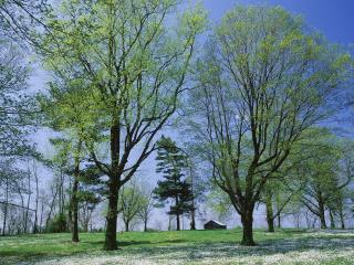 обои Два больших дерева на полянке фото