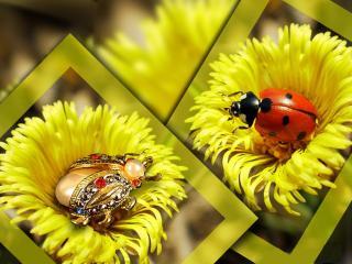 обои Драгоценный жук фото