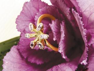 обои Кольцо в цветке фото