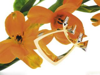 обои Необычное кольцо фото