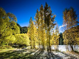 обои Осень Новая Зеландия фото