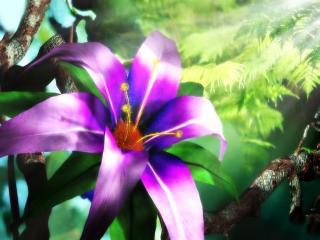 обои Распустившийся цветок красивой, фиолетовой лилии фото