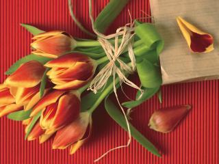 обои Цветы на 8 марта фото