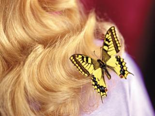 обои Бабочка на 8 марта фото