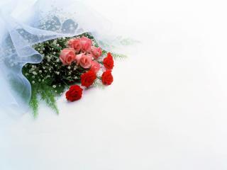 обои Цветы любви фото