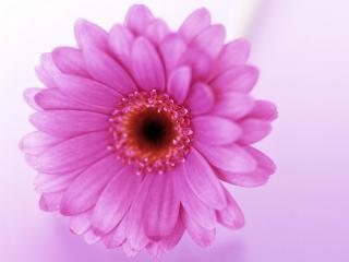 обои Цветок для любимой жены фото