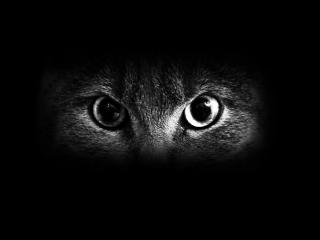 обои Кошачьи глаза - зеркало тайны и магии фото