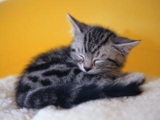 обои Фотография котенка Феликса фото