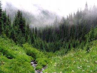 обои Туман закрывающий зеленый луг в лесу, ручеек фото