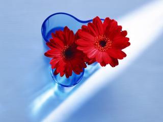 обои Цветы любимым девушкам на 8 марта фото
