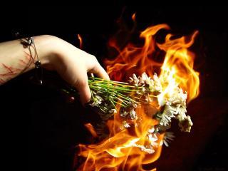 обои Гори, любовь, гори в пламени ненависти фото