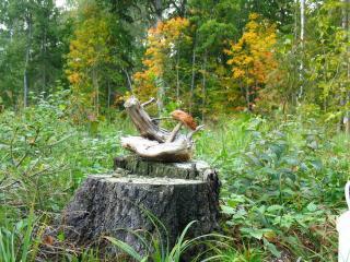 обои Лесной натюрморт фото