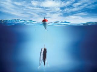 обои Приманка в виде рыбы фото