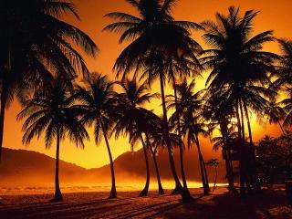 обои для рабочего стола: Пальмовый парк. Карибские острова