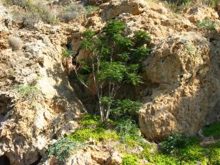 обои Деревце в скале фото