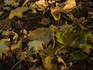 обои Листва на земле в лесу фото