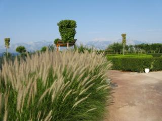 обои Колосья травы и лабиринт в парке фото