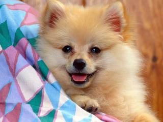 миленькая собачка бесплатно