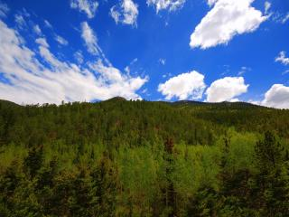 обои Горный лес фото