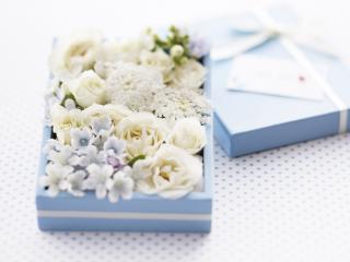 обои Белые цветы и жемчуг в синей коробочке фото