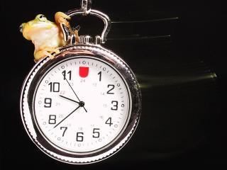 обои Карманные часы и лягушонок фото