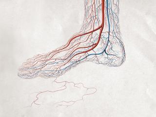 обои The blood vessels фото
