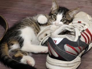 обои Кот и ботинки фото