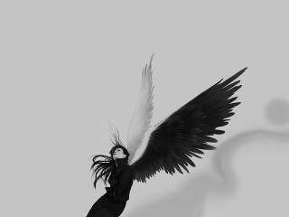 обои Девушка с чёрно-белыми крыльями фото