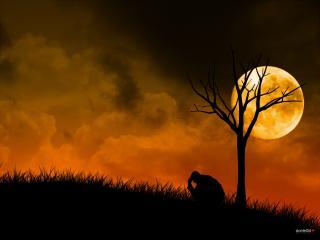 обои Тихая ночь при луне фото