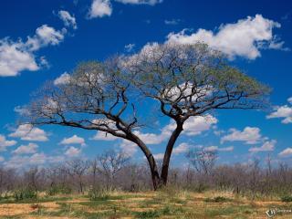 обои Опавшее дерево осенью фото