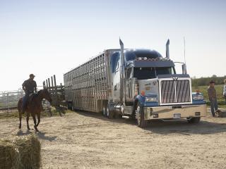 обои WESTERN STAR на ранчо фото