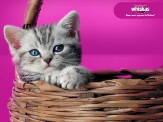 обои Whiskas - котенок в корзинке фото