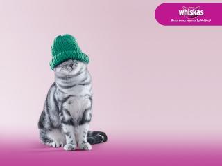 обои Whiskas - котенок в шапке фото