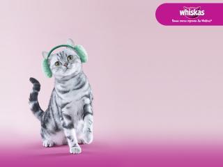 обои Whiskas - котенок в наушниках фото