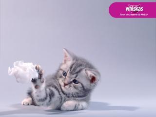 обои Whiskas - котенок с бумажкой фото