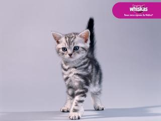 обои Whiskas - настороженный котенок фото
