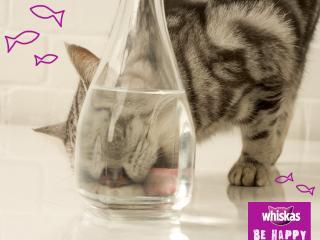 обои Whiskas - кот лижет вазу фото
