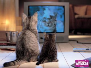 обои для рабочего стола: Whiskas - кошка с котенком смотрят рекламу