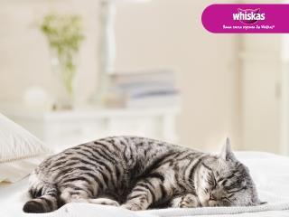 обои Whiskas - спящий полосатый кот фото
