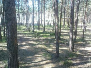 обои Белочка в лесу фото