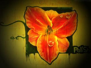 обои Граффити красная орхидея фото