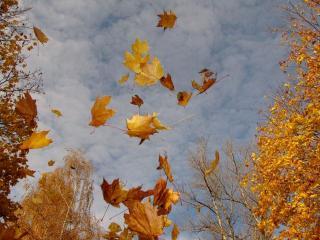 обои Листья желтые над головой фото