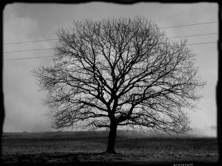 обои Дерево в Поле фото