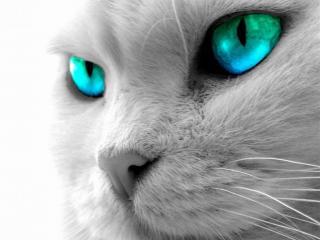 обои Зеленоглазая кошка фото