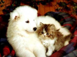 обои Неразлучные друзья фото