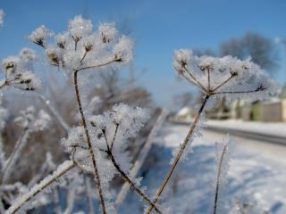 обои Замерзшие цветы фото