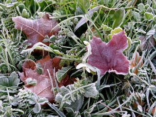 обои Осенние листья в замерзшей траве фото