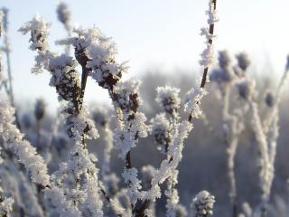 обои Замерзшая трава фото