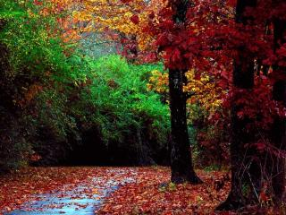 обои Красивые деревья фото
