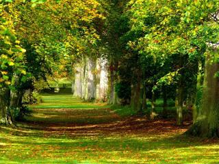 обои Аллея деревьев фото